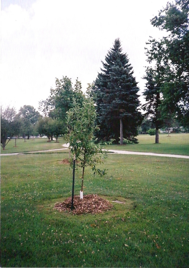 2002_8
